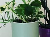 Plant addict comment j'ai arrêté tuer plantes presque)