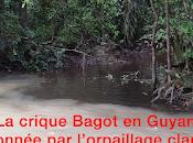 Pendant temps-là Guyane...