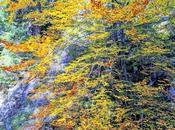 Joseph Marx Eine Herbstsymphonie Symphonie d'automne Autumn song