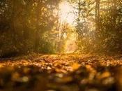 Prendre temps l'automne