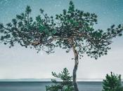 [PHOTOGRAPHIE] arbres solitaires clair lune