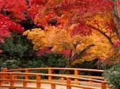 Koya-san, Japon sacré l'automne rouge