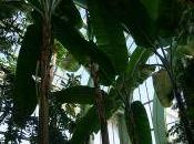 Berceau tropical retrouvailles assiégées (Redites)