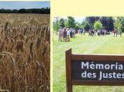 dimanche, Clairière Justes Thonon-les-Bains.