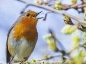 Cui-Cui, l'appli pour reconnaître chants oiseaux