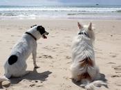 Quelles précautions prendre avant d'emmener chien
