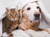 Chiens chats comment faire bons amis