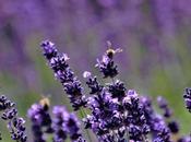 Pourquoi abeilles sont indispensables pollinisation