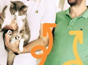 ANIMAUX chats toulonnais enfin droit vraies vacances
