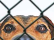 Quel produit désinfectant nocif pour nettoyer enclos chien