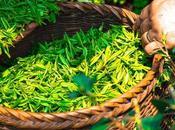 bienfaits vert selon nutrionnistes