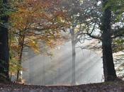 Bain forêt Bretagne