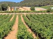 Cantarelle petite pépite Provence Dégustation Test avis