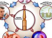 MALADIE PULMONAIRE CHRONIQUE Preuves d'efficacité l'acide hyaluronique