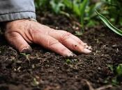Comment mesurer niveau fertilisation d'une production agricole