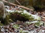 montagne accouché d'une souris