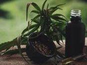 Cannabidiol huile voici tout vous devez savoir