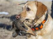 meilleurs accessoires technologiques pour chiens chasse