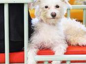 Vous pouvez maintenant avoir cette chaise conçue pour travailler côté votre chien