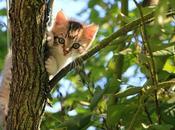 chat s'absente longues heures fait-il Faut-il surveiller