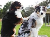 massage chien bienfaits
