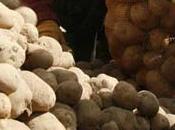 2008 année internationale pomme terre