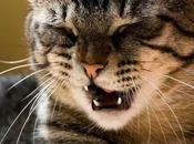 L'Éternuement chez chat.