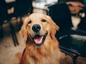 Pourquoi acheter l'huile pour votre chien