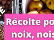 Récolte pommes, noix noisettes secret pour ramasser sans avoir (vidéo)