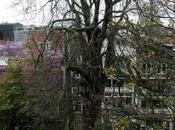 Faut-il abattre l'arbre d'Anne Frank