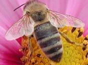 abeilles meurent, humanite meure egalement