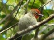 Quelques photos d'oiseaux terrestres